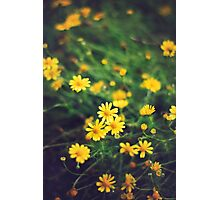 Hope Grows Photographic Print