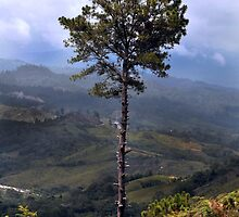 tree with landscape by mariamejia2
