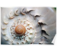 Snaggle-Toothed Shell Poster