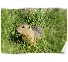 Prairie Dog,In A Blur Of Green,,Dizzy  With Delight Poster