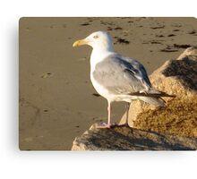 Gull-a-bill  Canvas Print