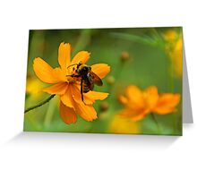 Bumble Bee Busy Greeting Card