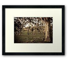 Trees - Fleurieu Peninsula, South Australia Framed Print