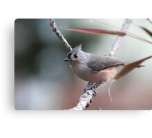 Tufted titmouse on an autumn afternoon Canvas Print