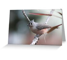 Tufted titmouse on an autumn afternoon Greeting Card