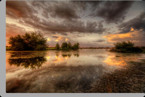 Swampset by Bob Larson