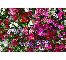 A sea of flowers Photographic Print