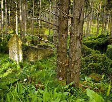 Forest Ruin - Fleurieu Peninsula, South Australia by Stephen Permezel