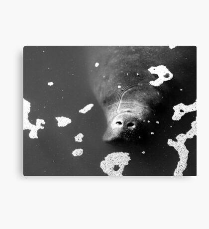 Manatee Monochrome Canvas Print
