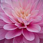 New Bloom by vivsworld