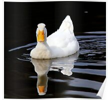 I was never an ugly duckling Poster