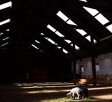 The big shed by kurrawinya