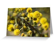 Acacia paradoxa Greeting Card