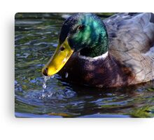 Lucky Duck Canvas Print
