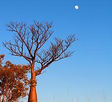 Kimberley Vistas by nicole makarenco