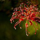 Hello Blossom! by Nicole Wells