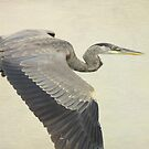Blue Heron On Canvas by Deborah  Benoit
