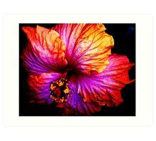 Radiant Hibiscus Art Print