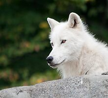 Cry Wolf by John44