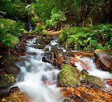 Burrator Falls, Dartmoor, England by Giles Clare
