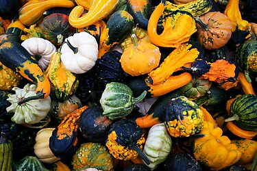 Colorful pumpkins  by torishaa