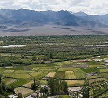 Leh valley, Ladakh, India  by idoavr