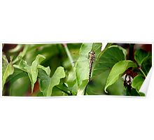 Dragonfly on Leaf Poster