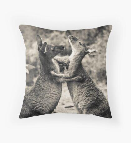 Fighting Kangaroo's, Perth hill's, Western Australia Throw Pillow
