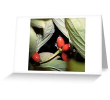 Autumn Nightscapes Greeting Card