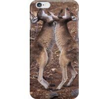 kangaroo's fighting, Perth hill's, Western Australia iPhone Case/Skin