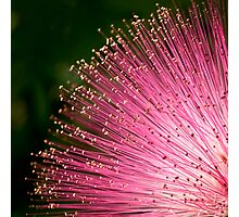 Pink fireworks tipped with gold Photographic Print