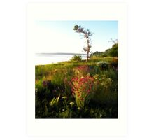 Port Townsend Wildflowers Art Print