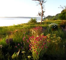 Port Townsend Wildflowers by Dana Joe Hutchinson