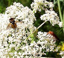 Fly and Longhorn Beetle by SophiaDeLuna