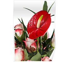 Beautiful red anturio flowers Poster
