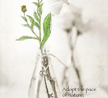 Adopt the pace of Nature by Maree  Clarkson