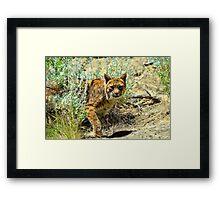 Silent Predator Framed Print