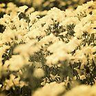 Dreaming Flowers by J.B. Johnston