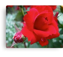 Red Ruby Rose Canvas Print