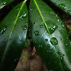 Leaves  by jankolas