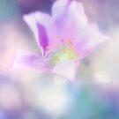 Fleur IV by Damienne Bingham