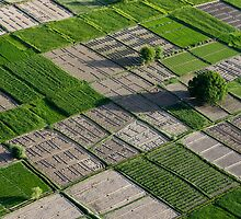 Checker Board Fields in Afghanistan by Tim Grams
