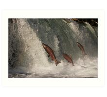 A Trio of Jumping Salmon Art Print