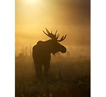 Bull Moose in Fog Photographic Print