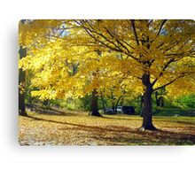Central Park, New York City  Canvas Print