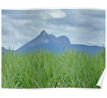 Mount Warning with Cane fields Poster