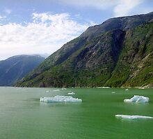 Ice Floats, Alaska by Alberto  DeJesus