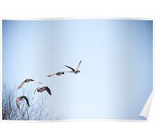 Ducks in Flight Poster