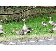 Goosey Goosey Gander Photographic Print