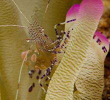 Dancing on An Anemone by Brent Barnes